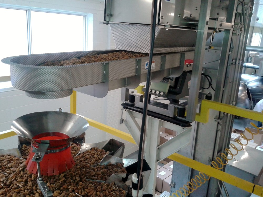 Discharge of Bucket Conveyor feeding product to Crossfeeder and Packaging Scale